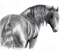 Horse Portraits by Bridgette Lewis
