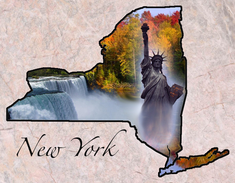 what is the new york state bird. picture of new york state bird