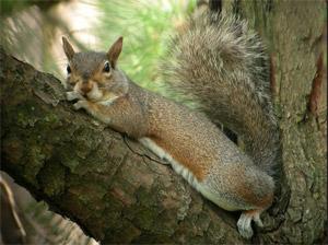 North Carolina - State Symbols, Fun Facts, Photos, Visitor Info